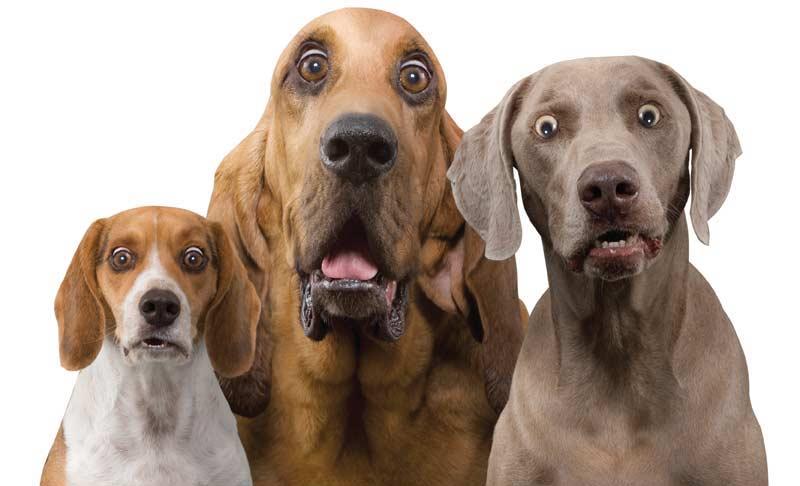 surprised-dogs1.jpg