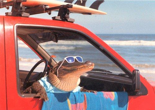 Funny+Alligator_4.jpg