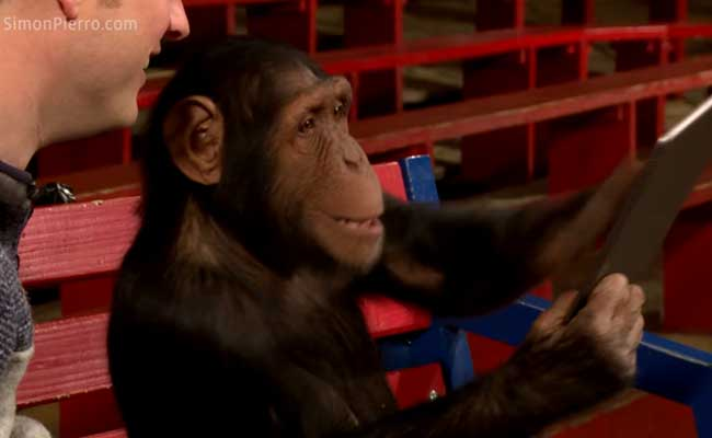 chimps-and-magic_650x400_71455795144.jpg